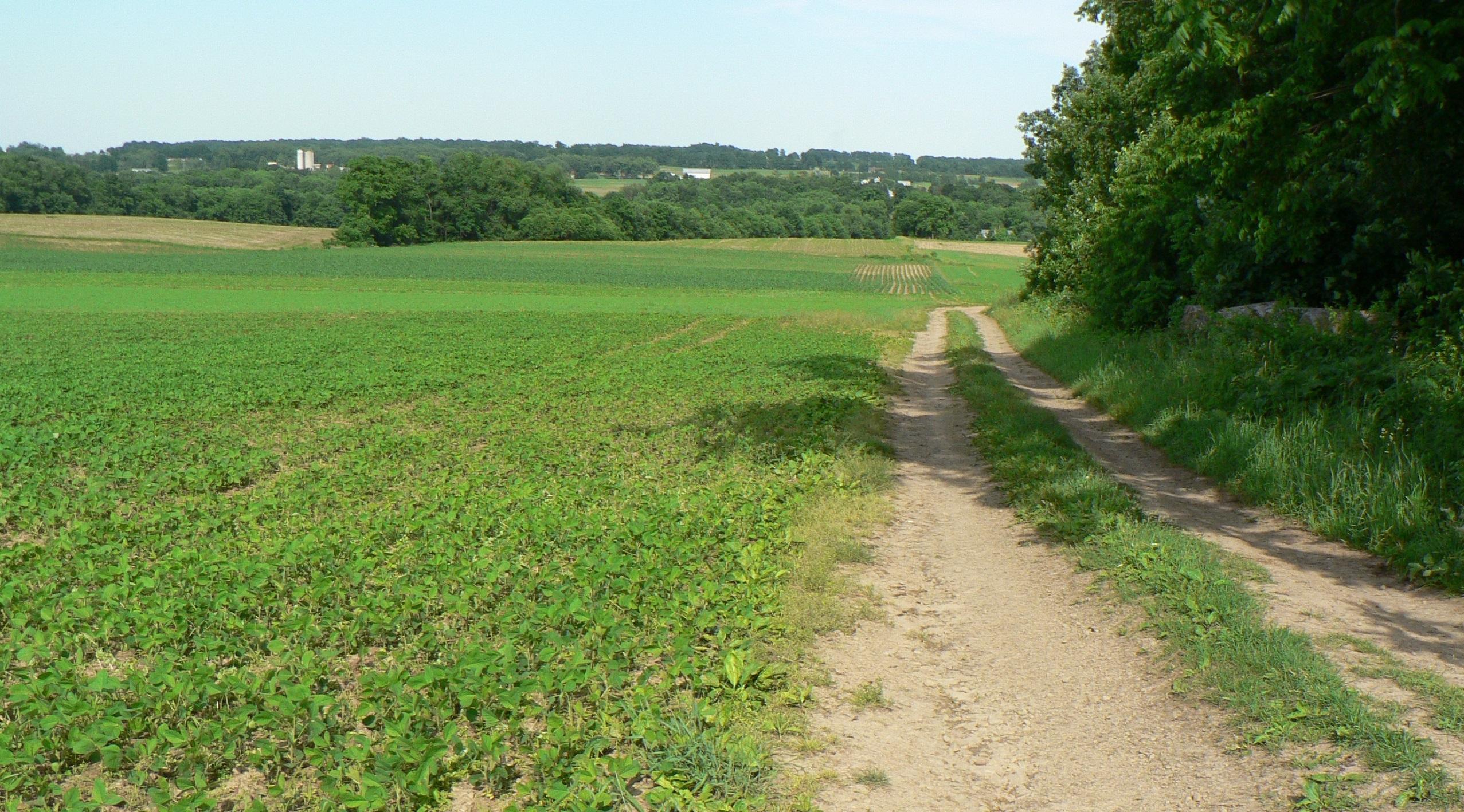 Sweet Fields