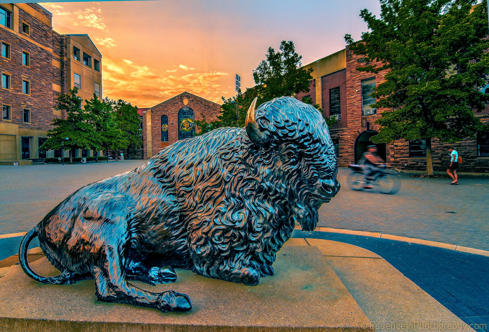University Of Colorado Boulder